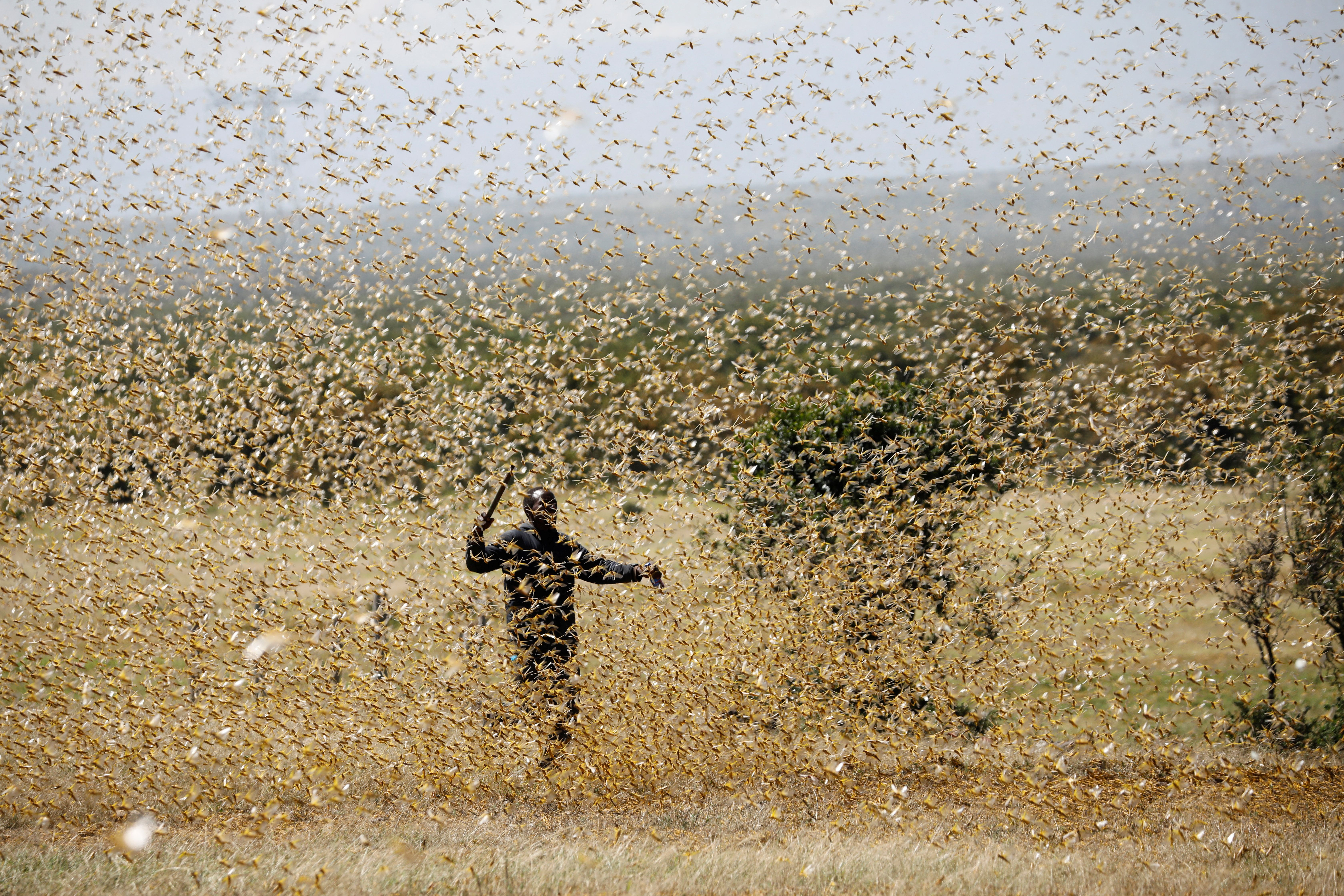 A man attempts to fend-off a swarm of desert locusts at a ranch near the town on Nanyuki in Laikipia county, Kenya.