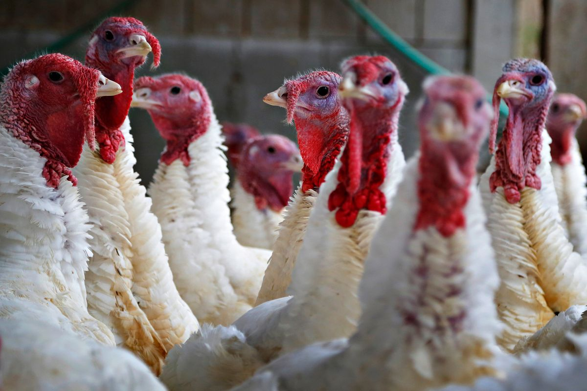 THREE STORIES IN THE KEY OF: US-STYLE THANKSGIVINGS AROUND THE WORLD