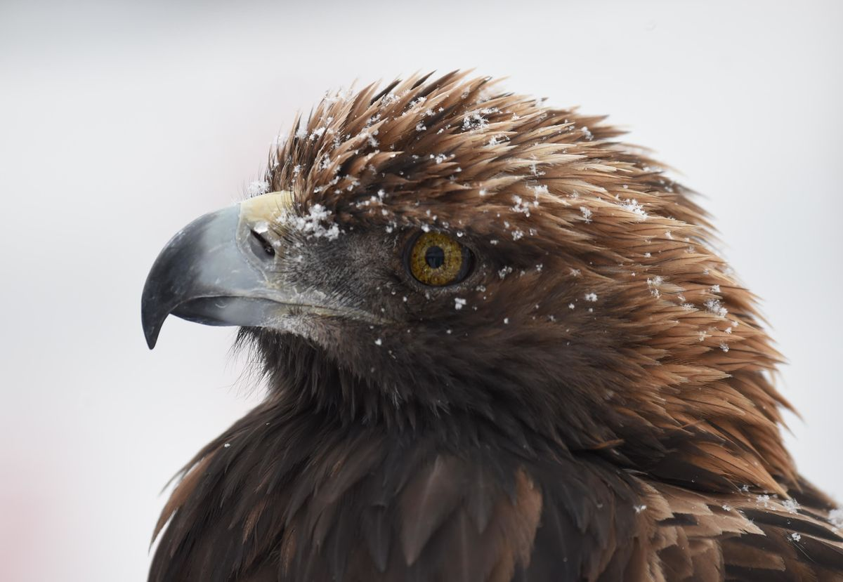 Hard Numbers: Where Eagles Dare to Roam, Expensively