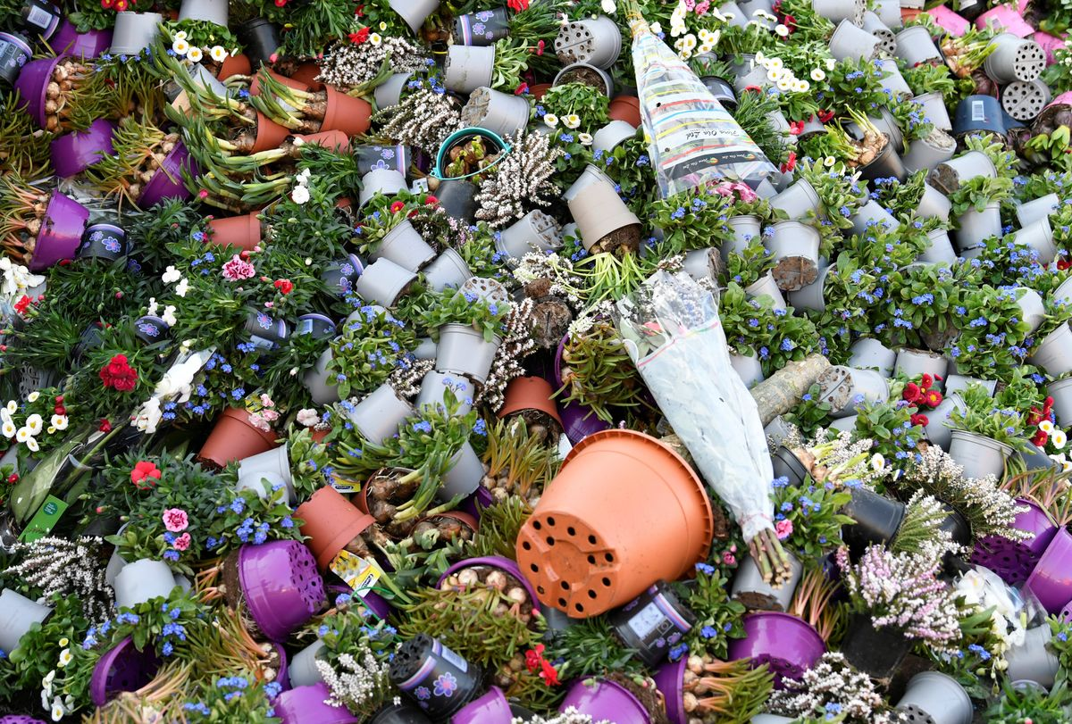 Hard Numbers: Women at risk, Dutch flowers dumped, Saudis expel Ethiopian migrants, coronavirus origin poll