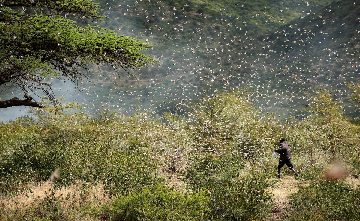 Hard Numbers: Ethiopia faces locusts again, Japan's COVID response lags, and Russian booze booms