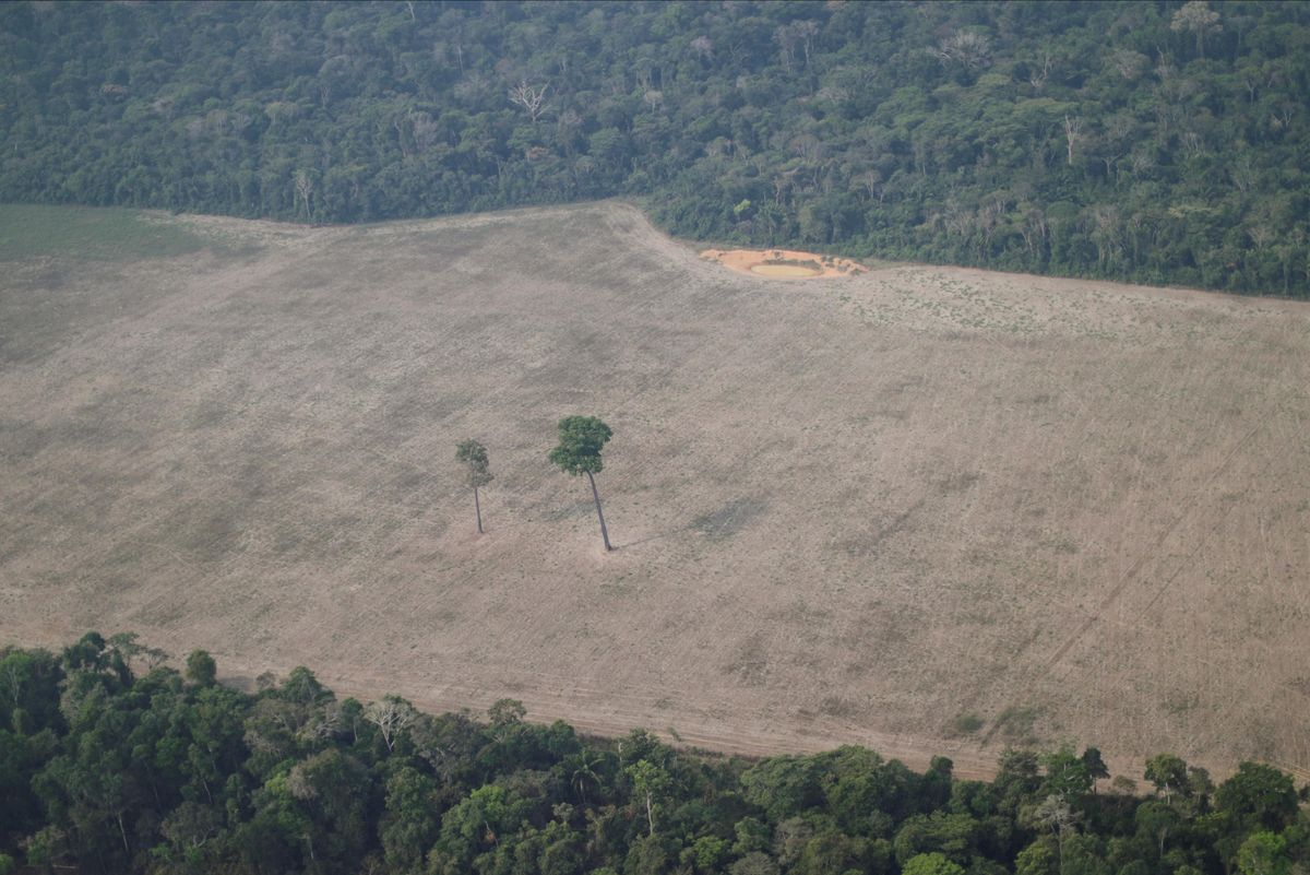 Hard Numbers: Amazon deforestation, South Sudan famine, COVID vaccine protection, Lebanese inflation