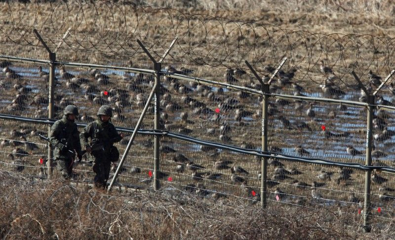 NATURE INTERLUDE: THE DMZ IS FOR THE BIRDS