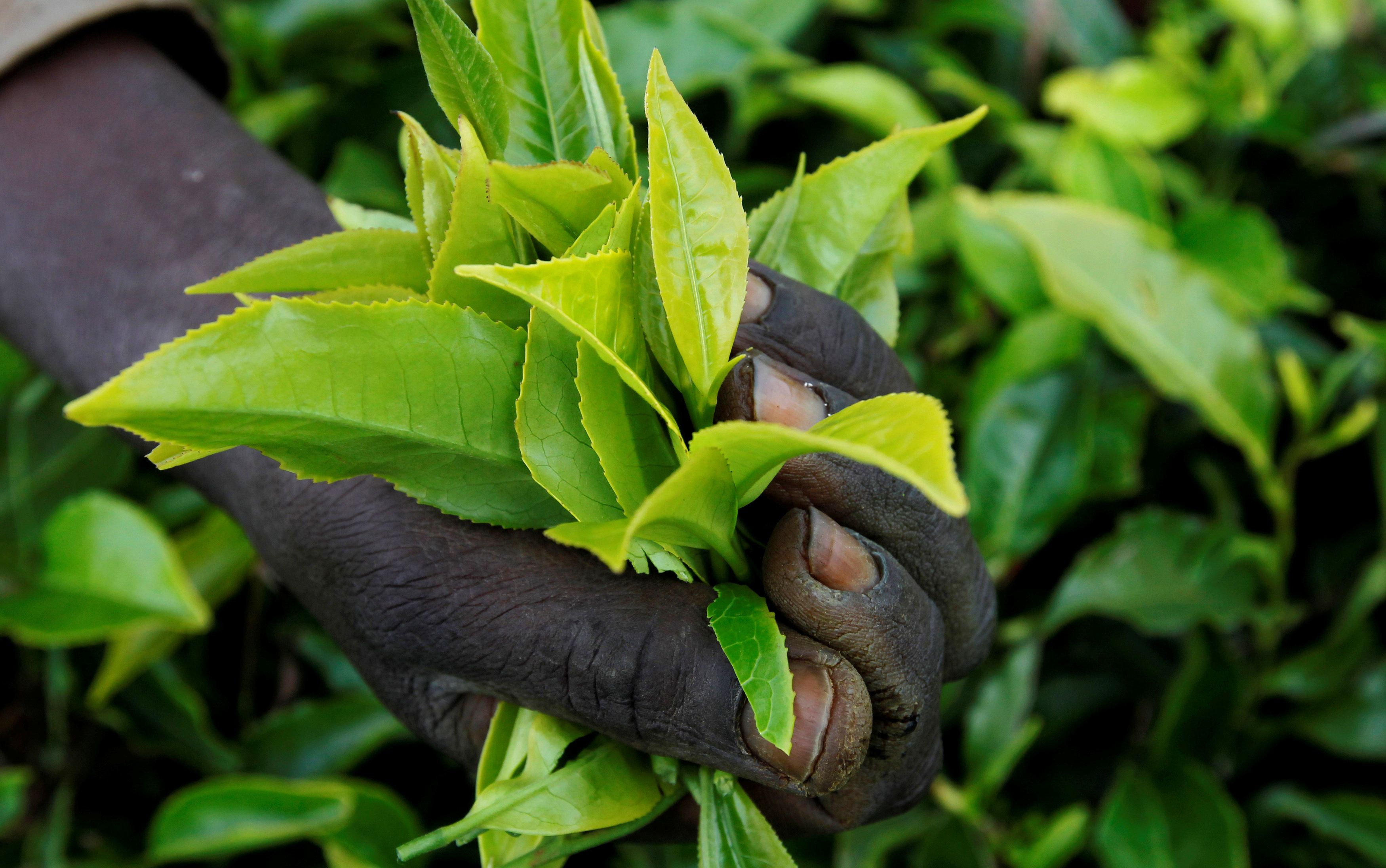 Hard Numbers: Kenya's tea industry takes a spill, twin bombs in the Philippines, Taliban's negotiating team, Lukashenko targets the press