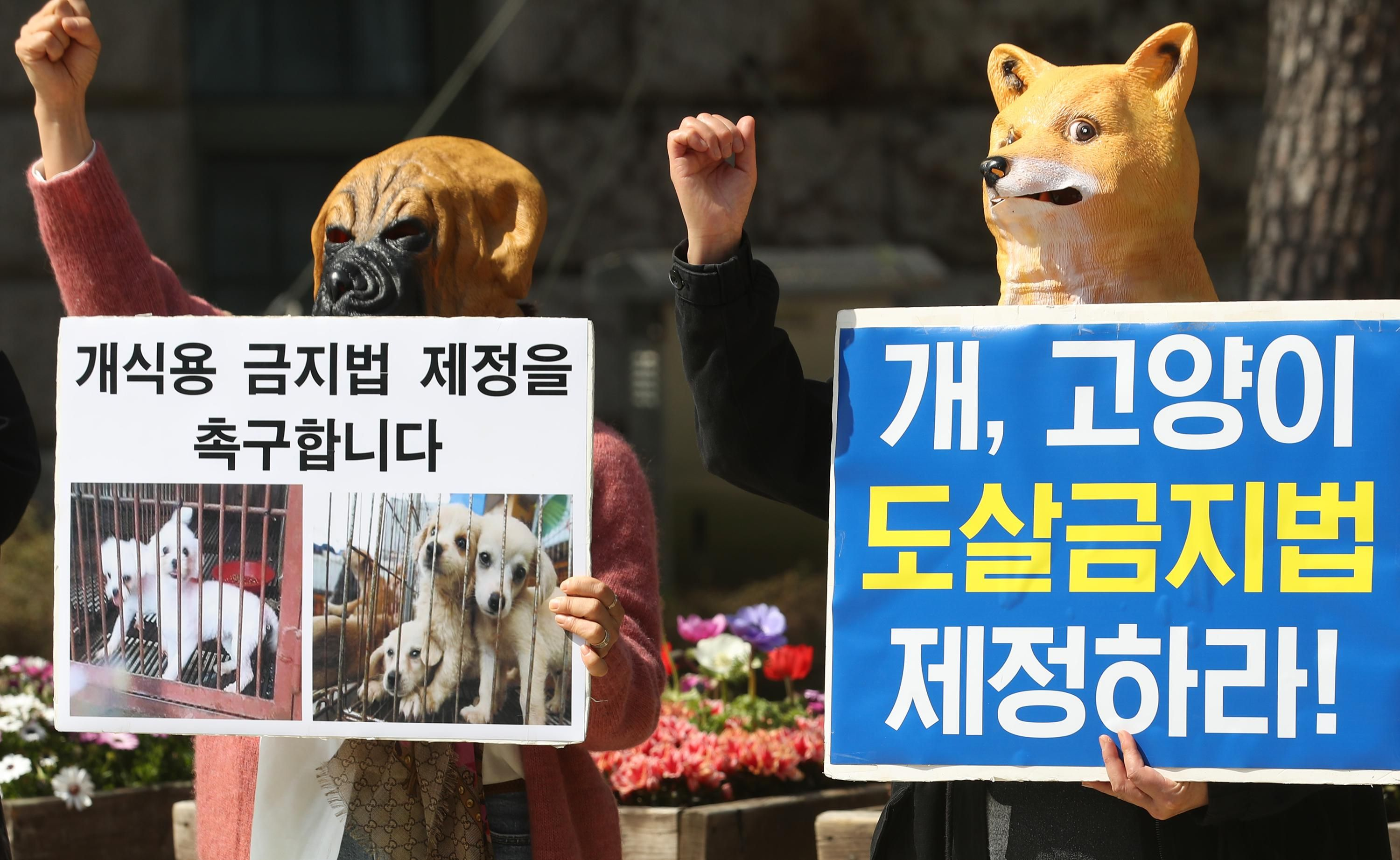 Members of the Korea Association for the Protection of Animals, an animal rights group, meet in Seoul on April 6, 2020 to call for the enactment of a law prohibiting trade and eating cat and dog meat.