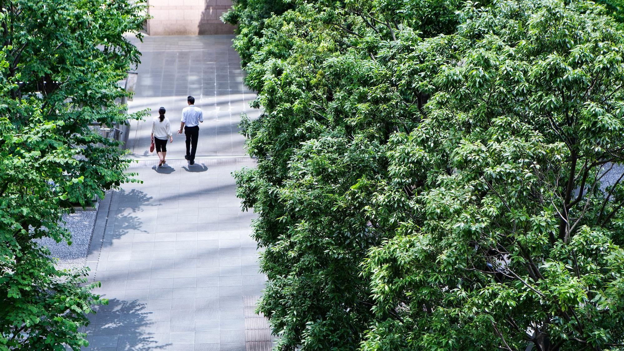 People walk on a tree-lined path